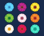 Set Of Colorful Chrysanthemum Flowers
