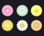 Beautiful Chrysanthemum Vector