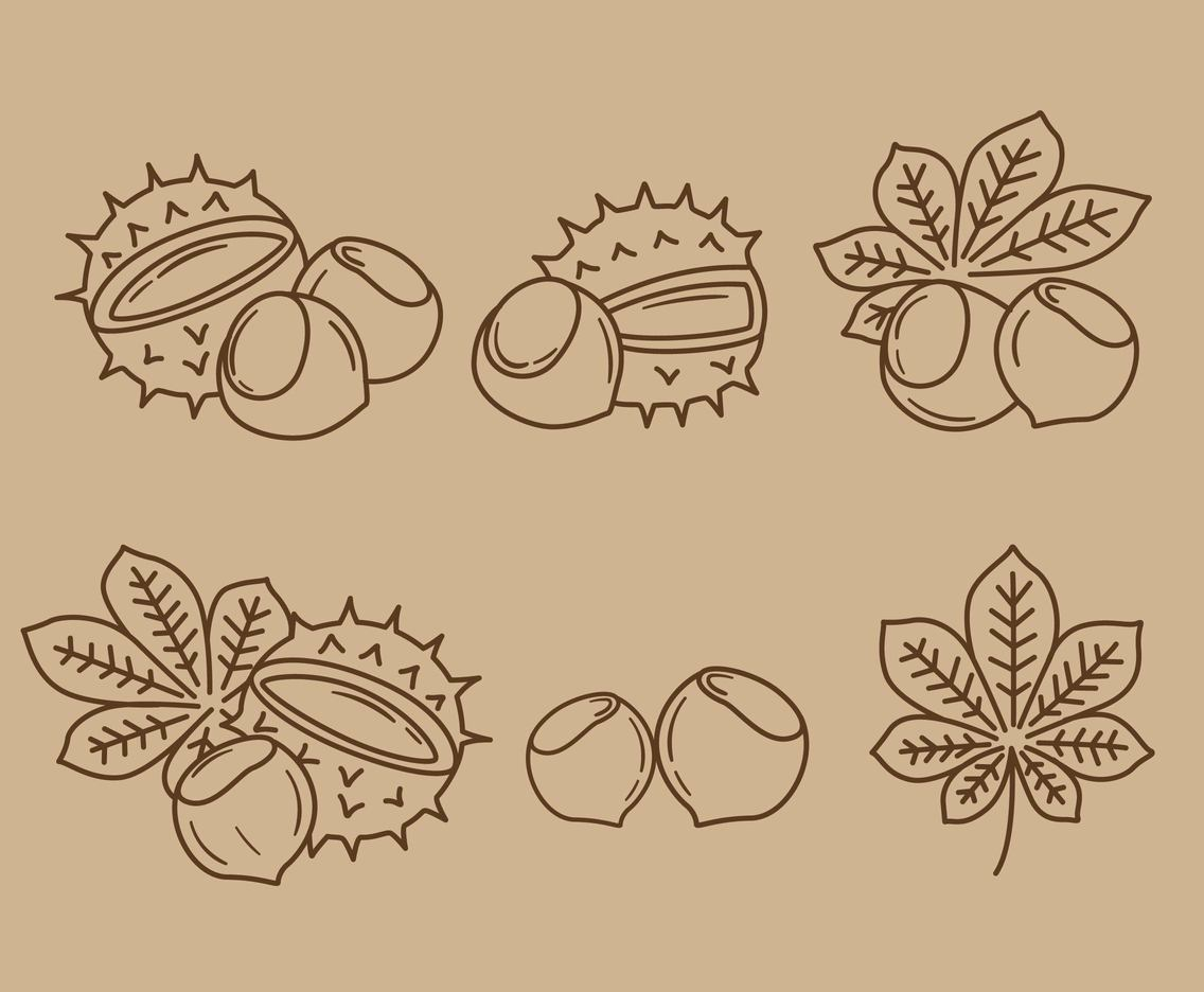 Sketch Chestnut Element Vector