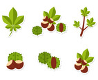 Flat Chestnut Vectors