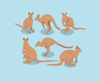 Kangaroo Illustration Vector