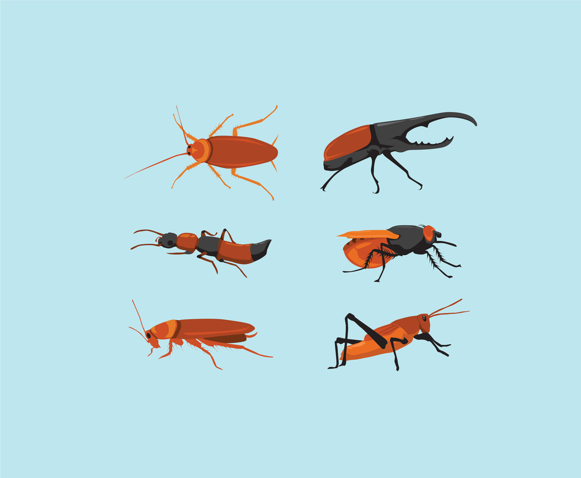 Realistic Insects Illustration Vector