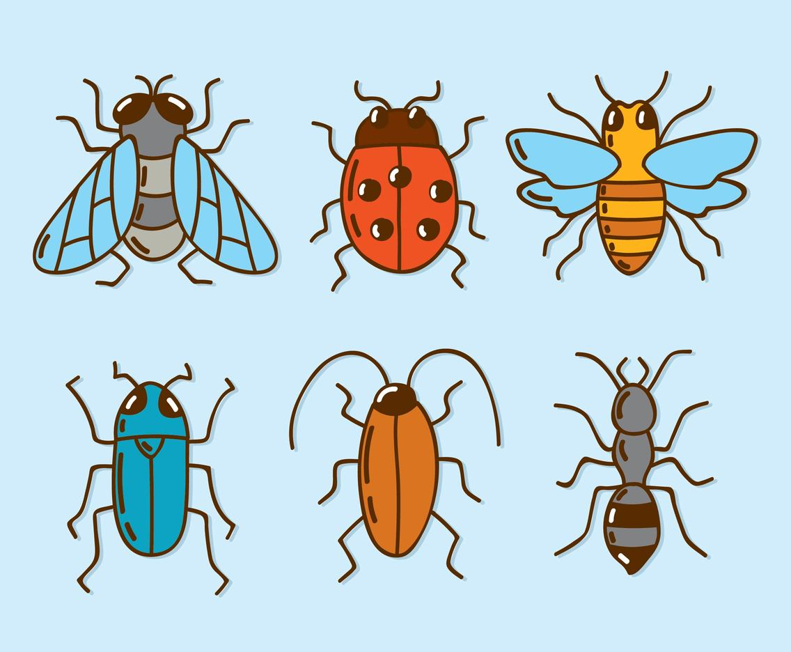 Hand Drawn Insect Collection Vector
