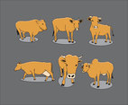 Cattle Illustration Vector
