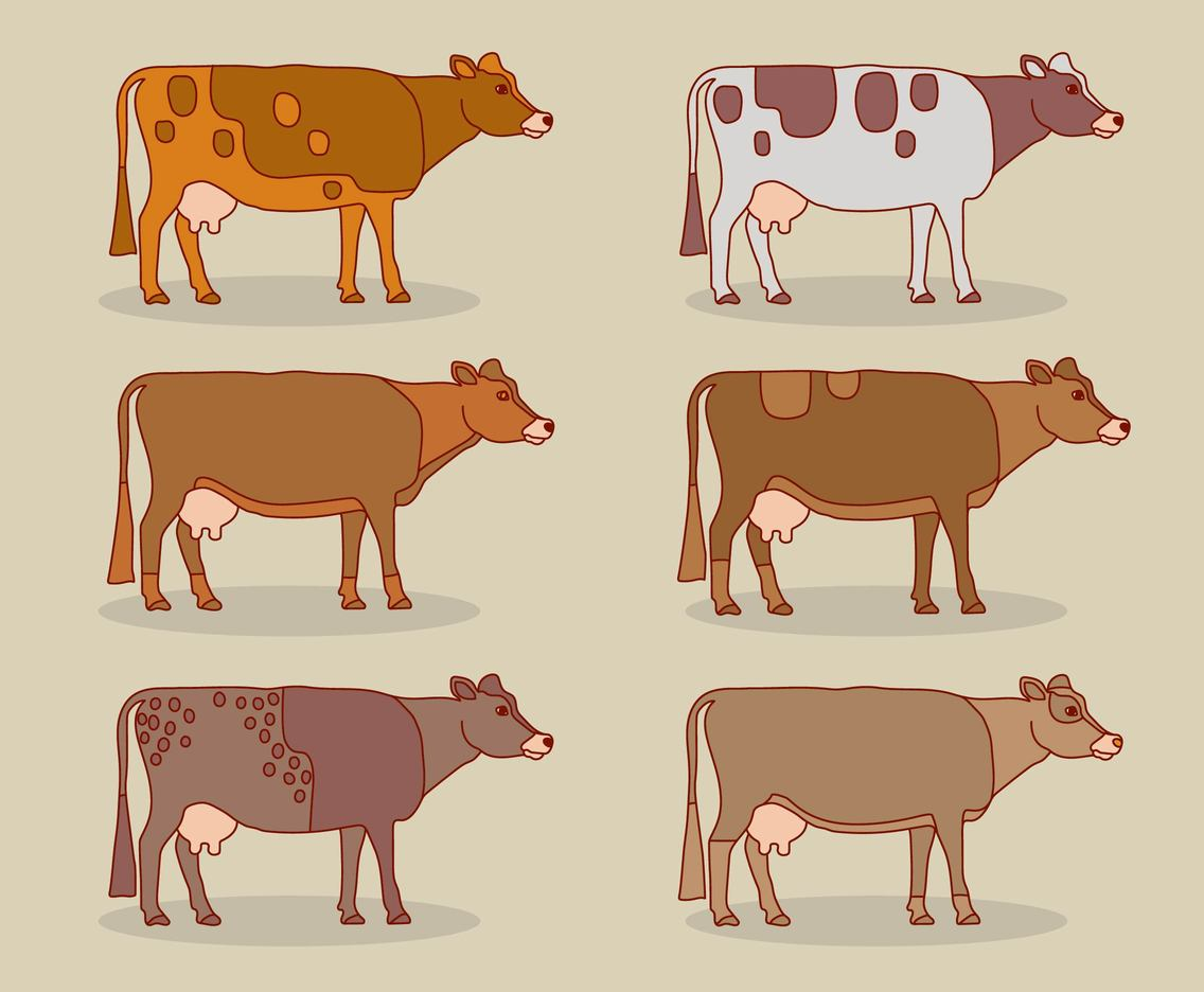 Cattle Collection Vector