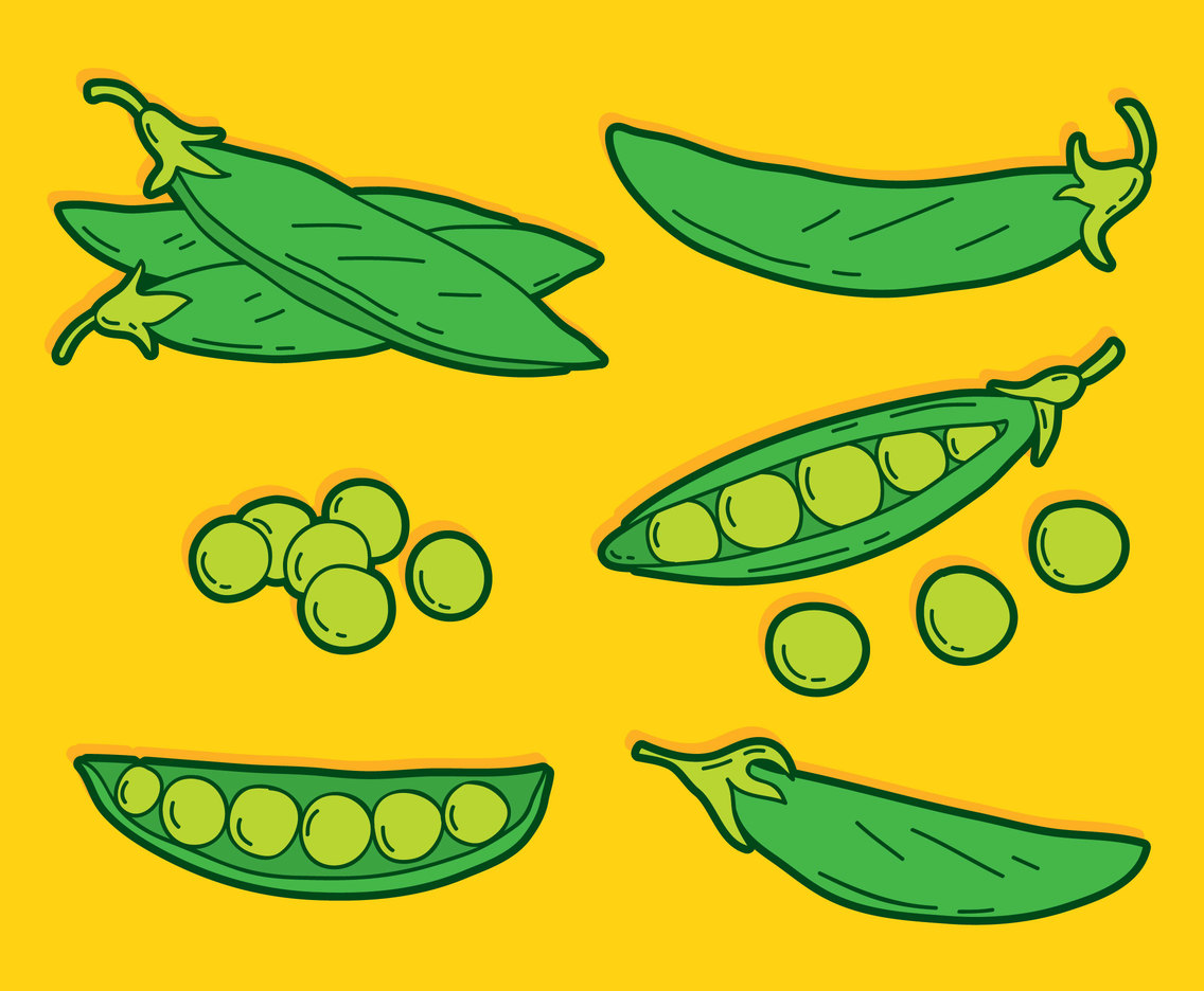 Hand Drawn Peas Vector