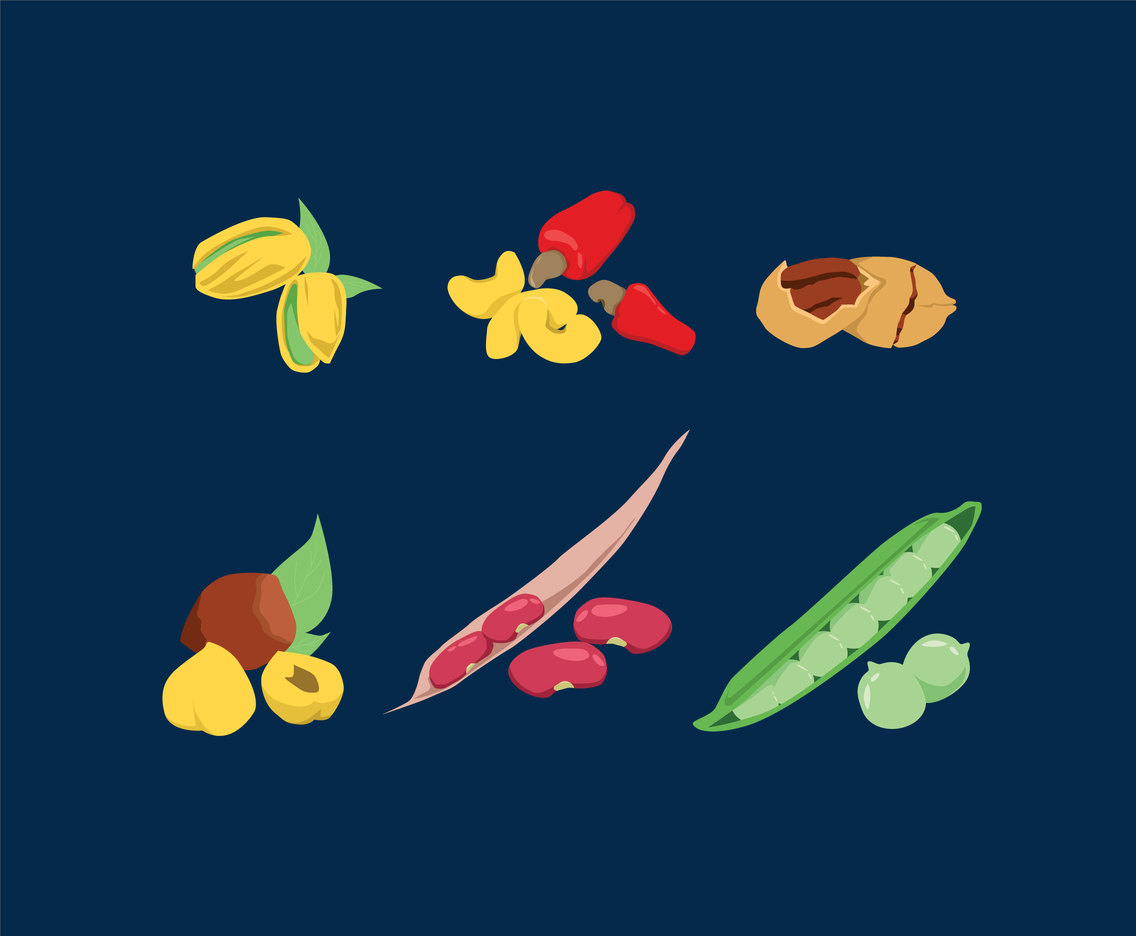 Various Peas and Nuts Vector