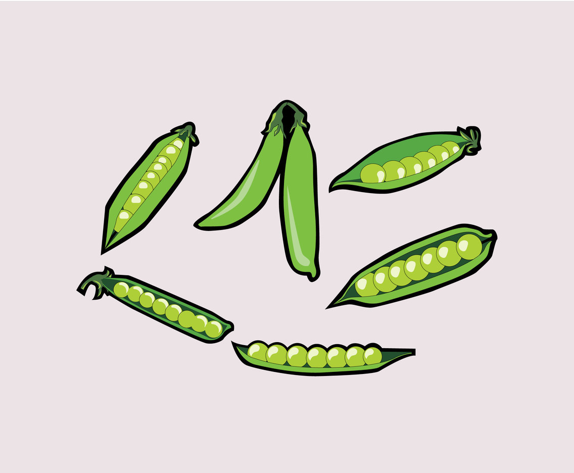 Peas Illustration Vector