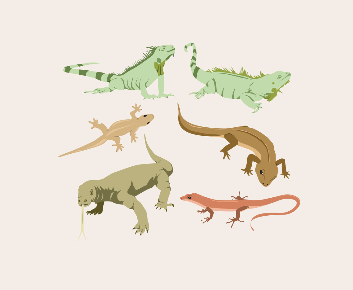 Various Lizard Vector