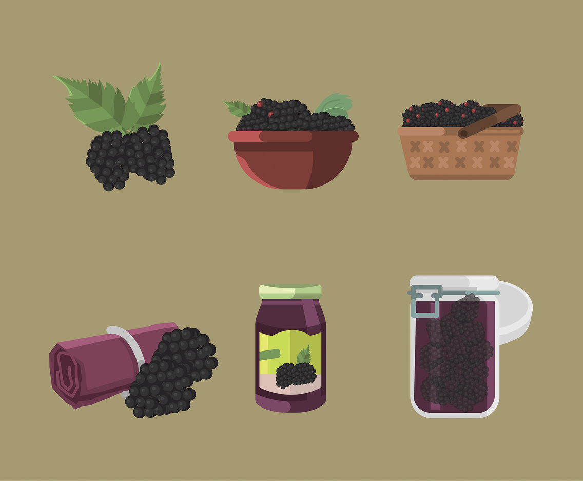 Blackberry Vector in Flat Design