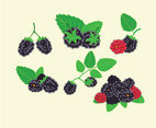 Fresh Blackberries Vector