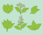 Green Tobacco Leaf Vector