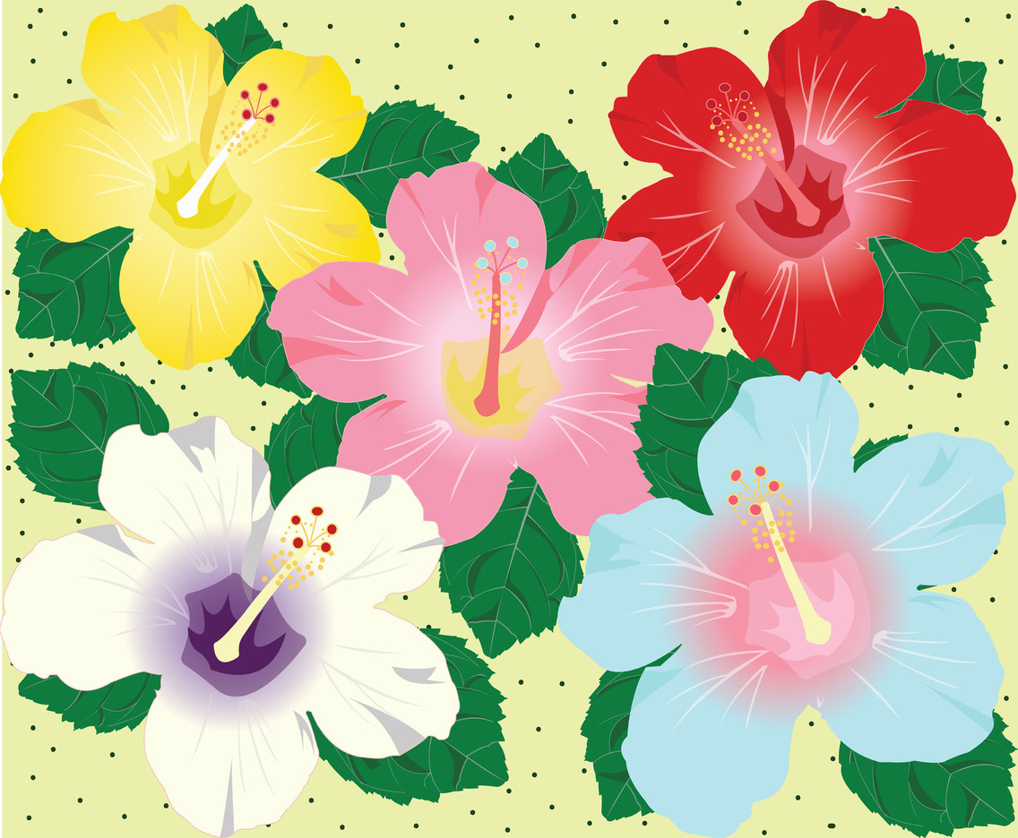 Hibiscus Flowers Background