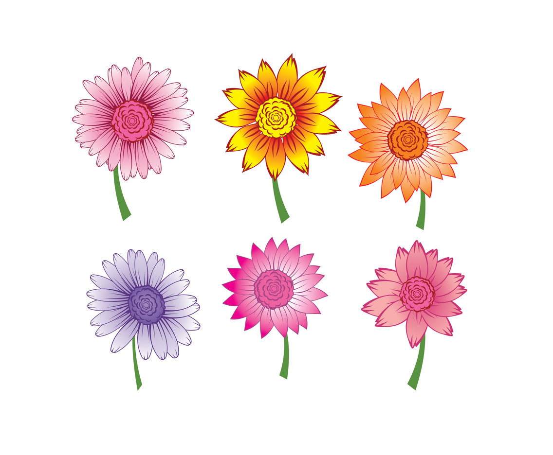Isolated Colorful Gerbera Vector