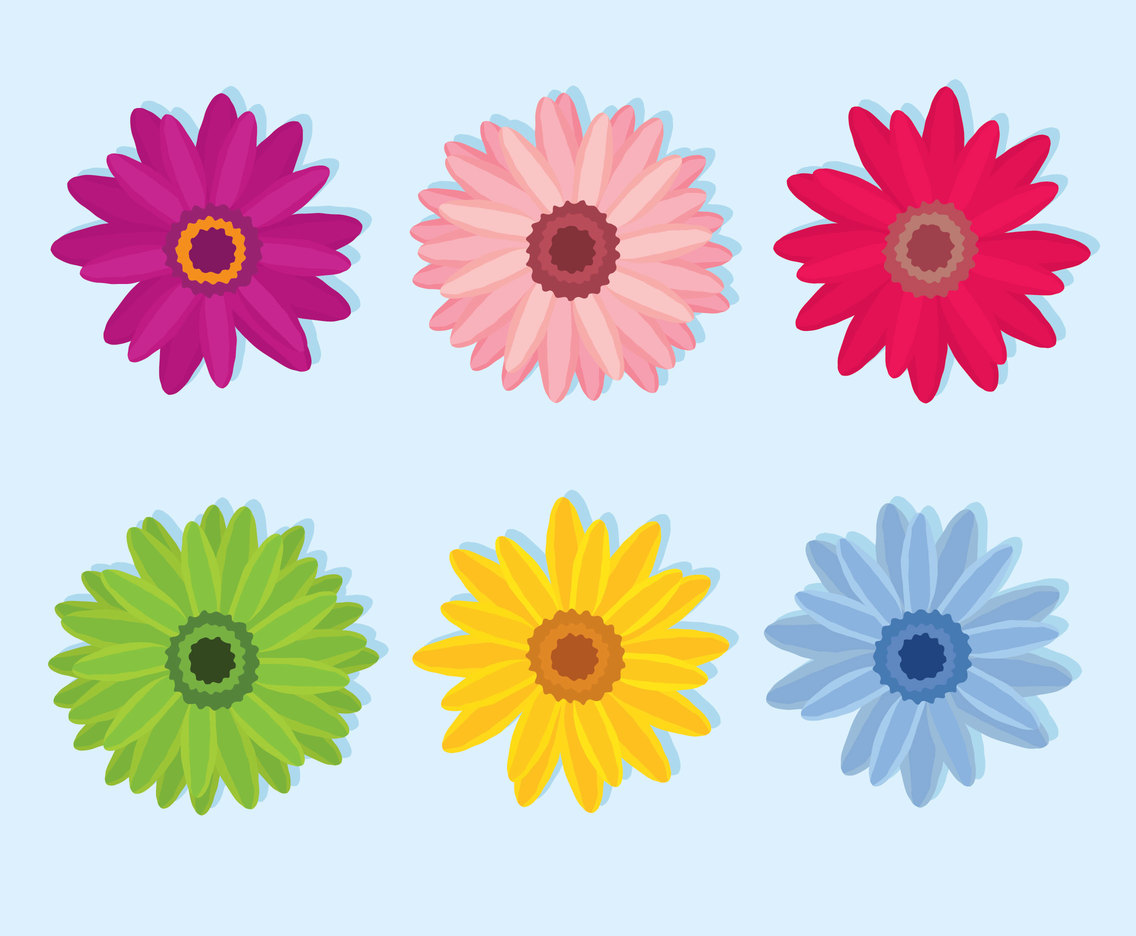 Colorful Gerbera Flowers Vector