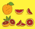 Hand Drawn Grapefruit Vector