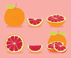 Grapefruit Collection Vector
