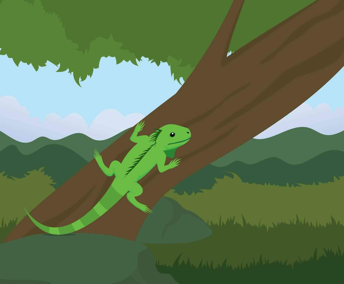 Green Iguana On Tree's Branch Illustration