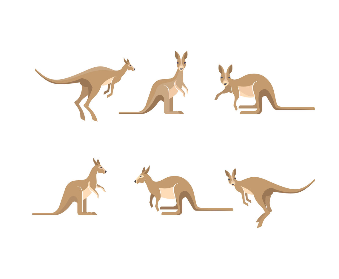 Isolated Kangaroo Vector