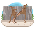 Kangaroo Fighting Vector