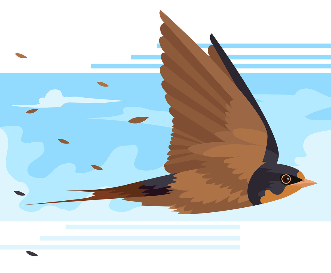 Swallow in the Sky Vector