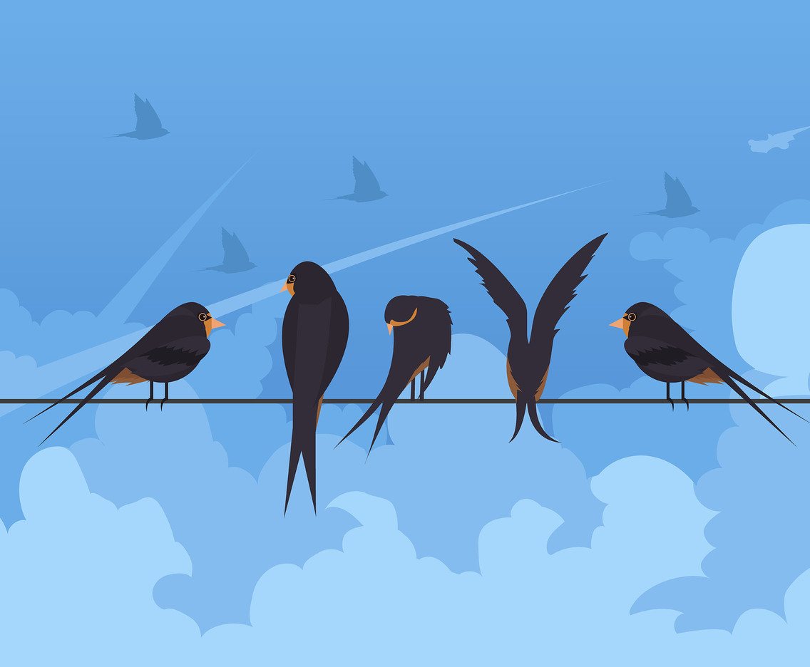 Swallow on Wire Vector