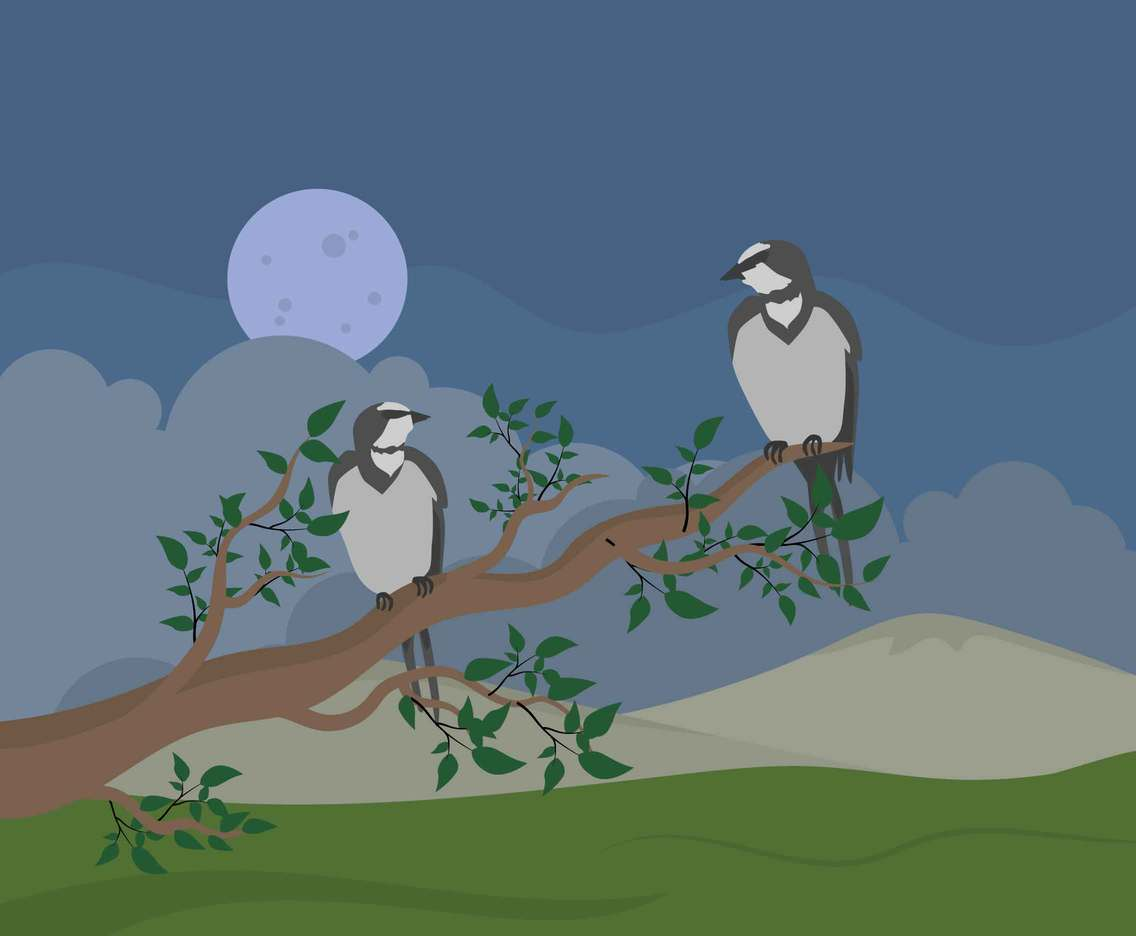 Two swallows On Tree Illustration