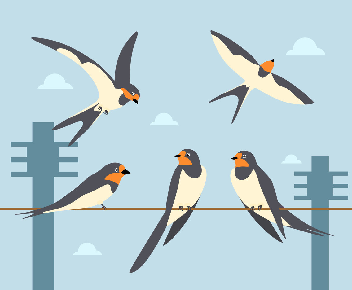 Swallow Illustration Vector