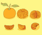 Hand Drawn Tangerine Collection Vector