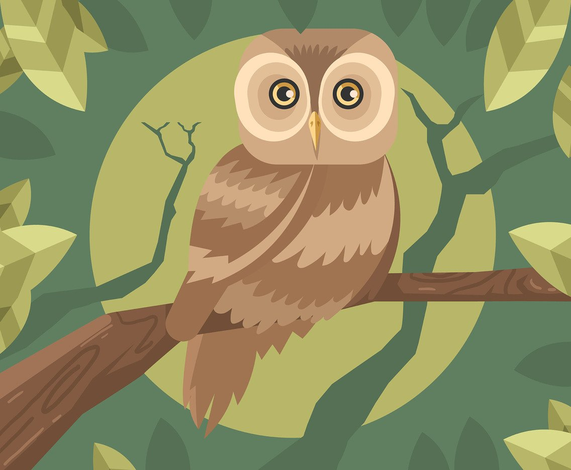 Brown Owls Vector