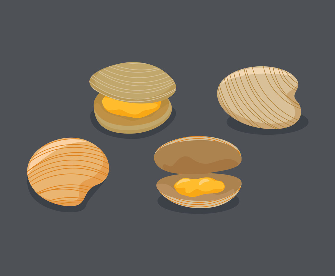 Outstanding Clam Vectors