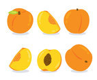 Peach Fruit On White Vector
