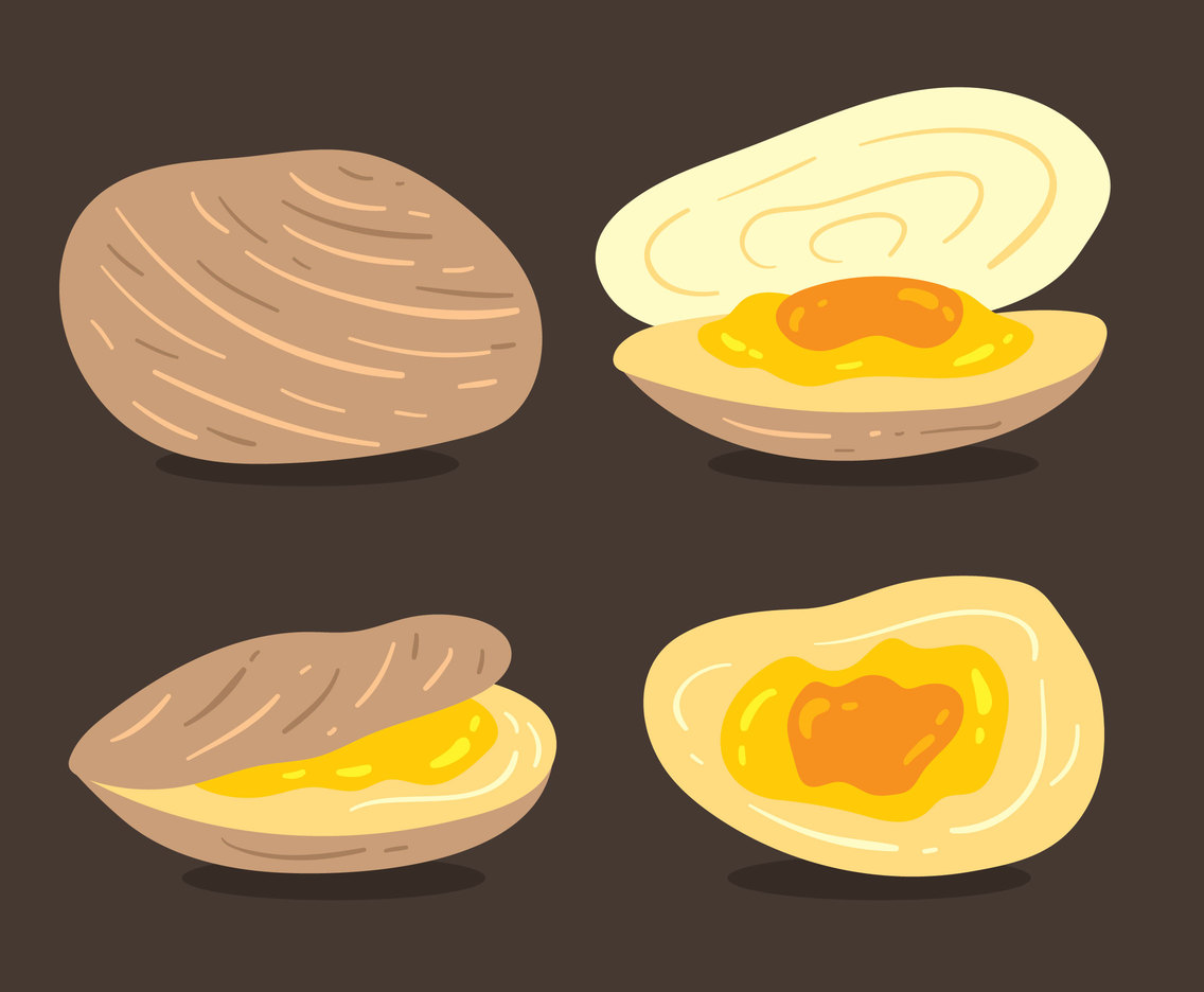Clam Collection Vector