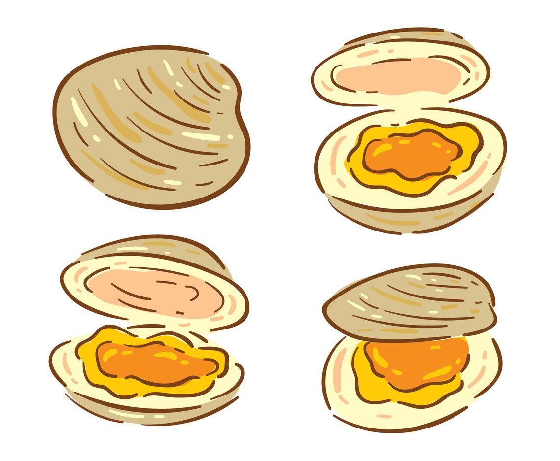 Clam On White Vector
