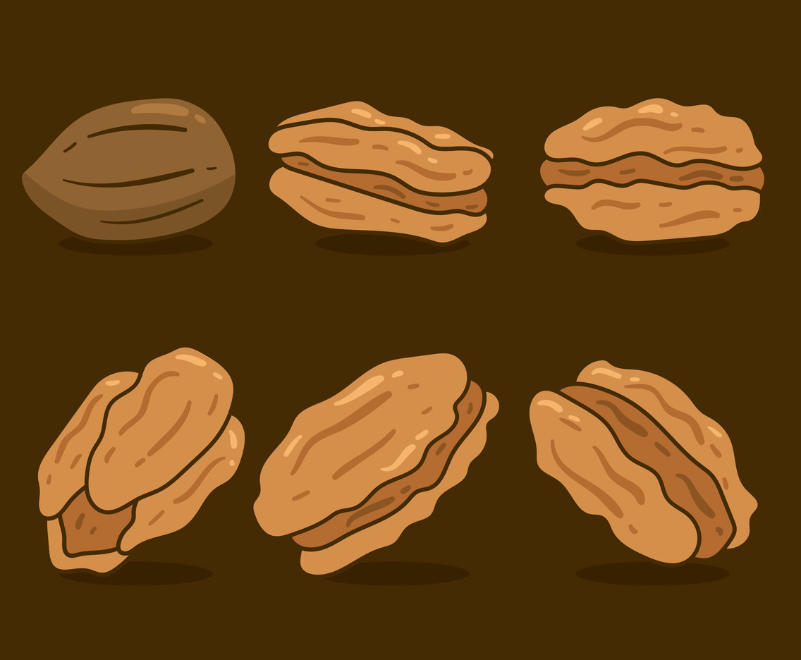 Brown Pecan Nuts Vector