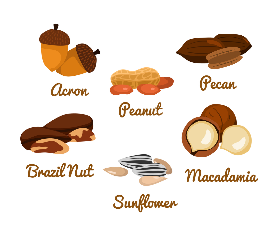 Isolated Nuts Vector