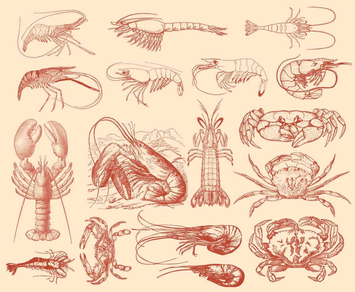 Shrimp Crab And Lobster Illustrations