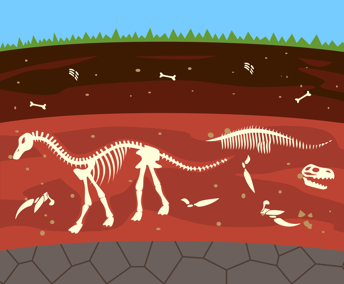 Fossil Exploration Vector