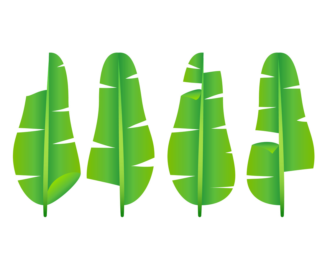 Unique Banana Leaf Vectors