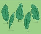 Hand Drawn Banana Leaves Vector