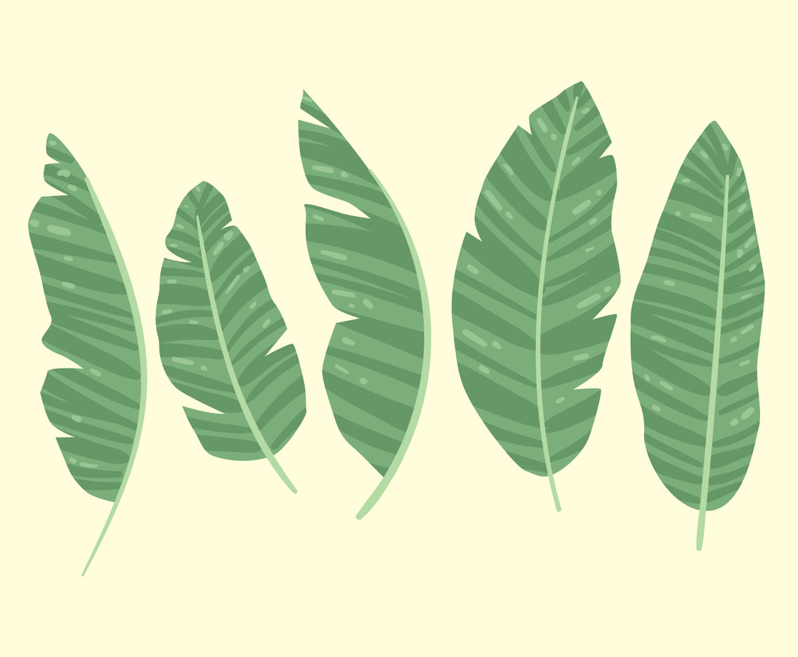 Banana Leaves Collection Vector
