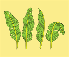Banana Leaf Handdrawn