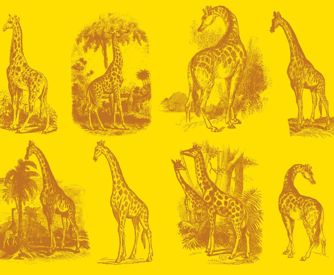 Old Style Drawing Giraffes