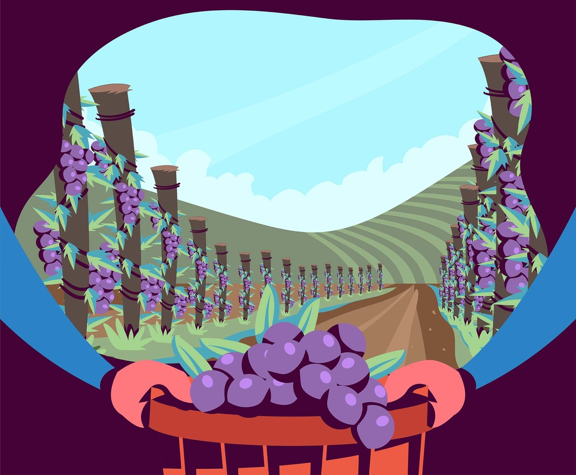 Vineyard Scenery First Person