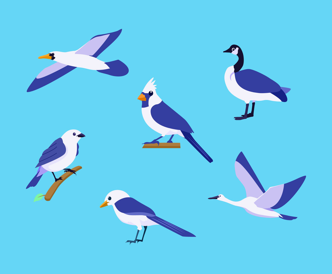 Various Birds Clipart Vector