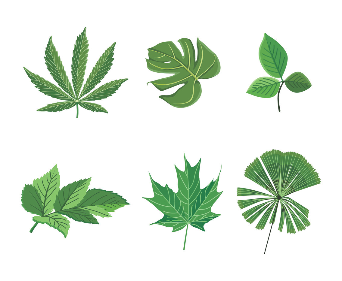 Isolated Green Leaves Clipart Vector