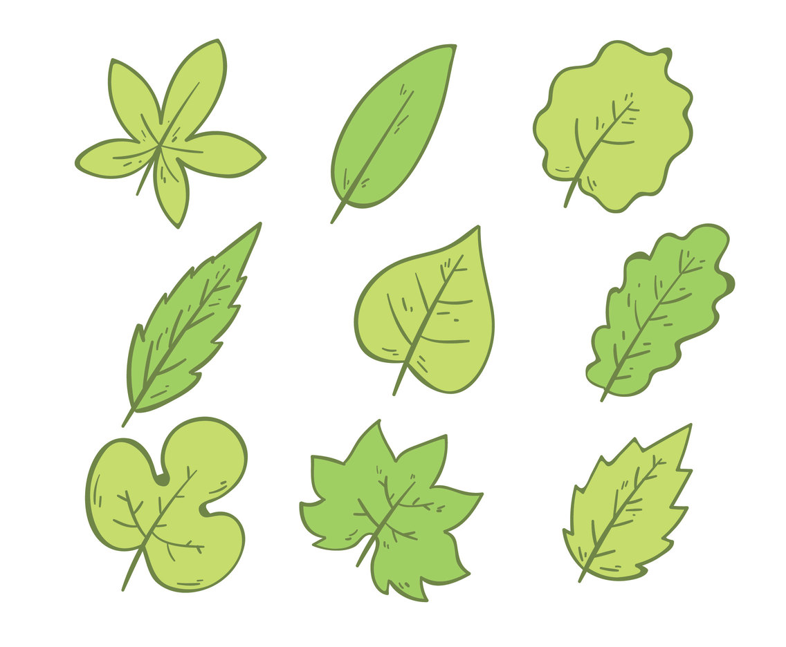 Hand Drawn Green Leaves On White Vector