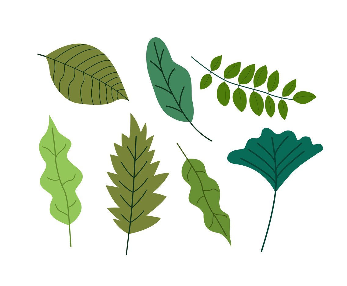 Flat Green Leaves Clipart Vector