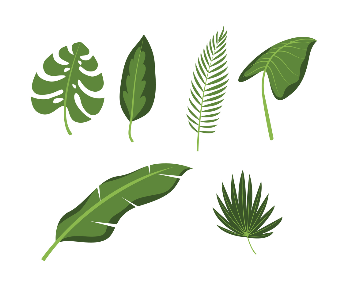 Tropical Leaves Set Vector Art Graphics Freevector Com Sign up for free and download 15 free images every day! tropical leaves set vector art