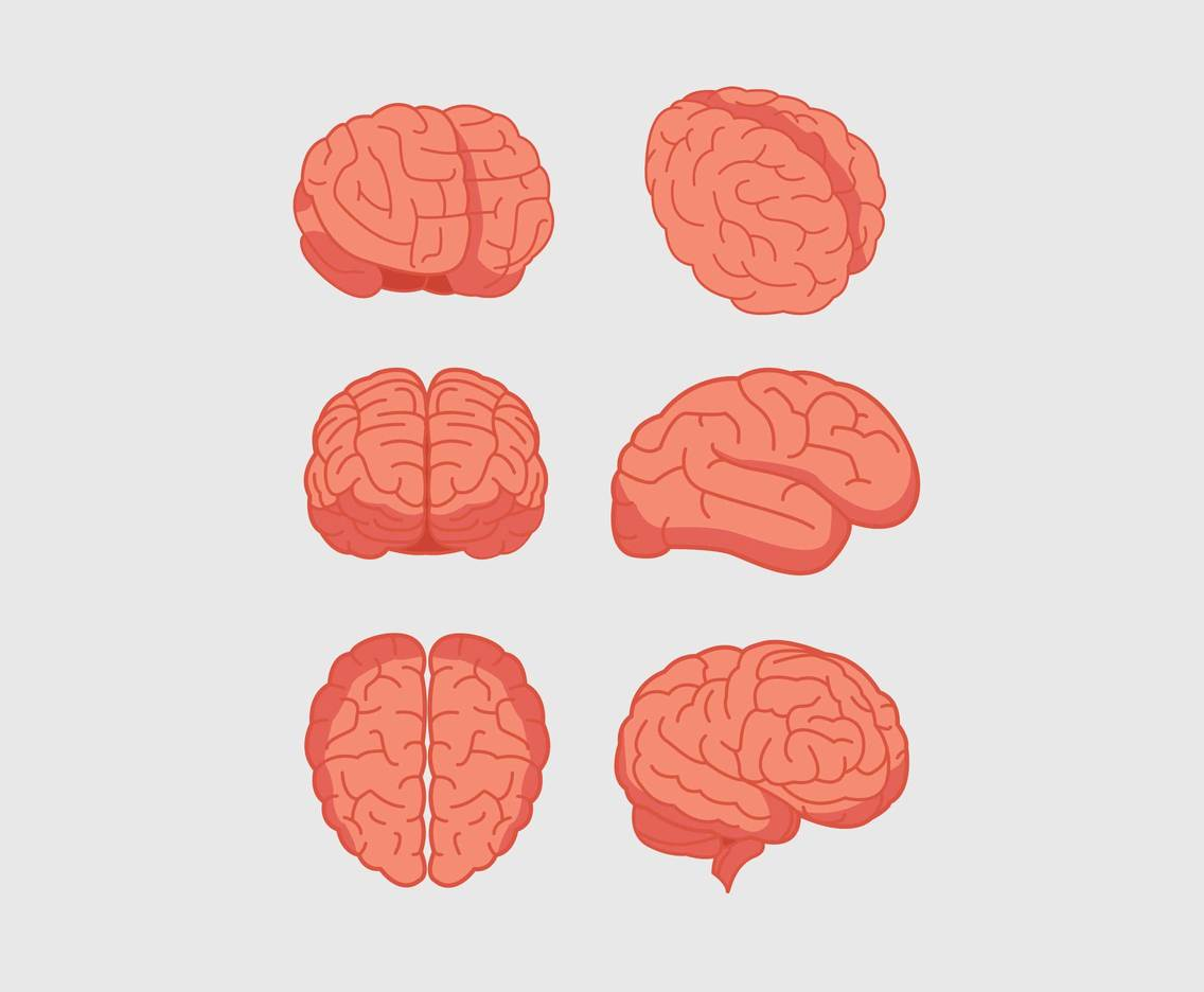 Brain Illustration Vector